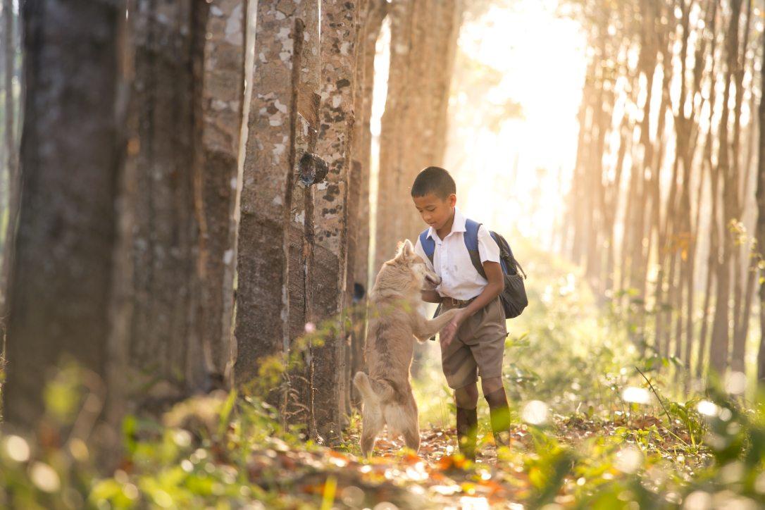 backpack-blur-boy-415100