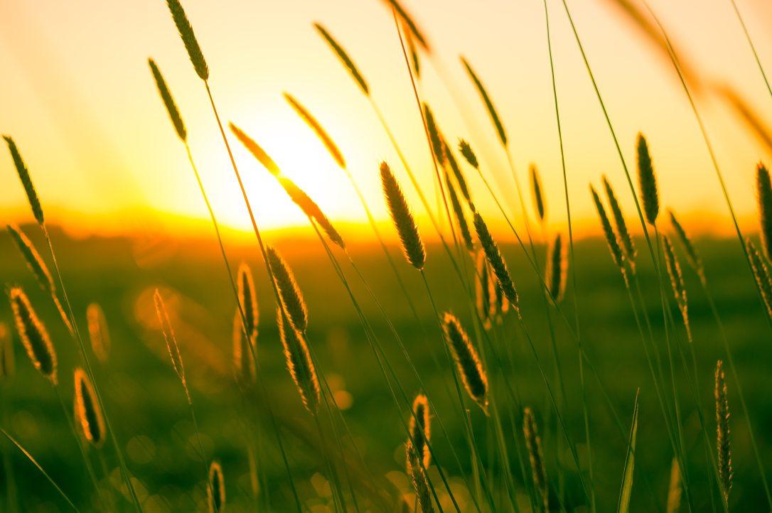 field-meadow-summer-9568